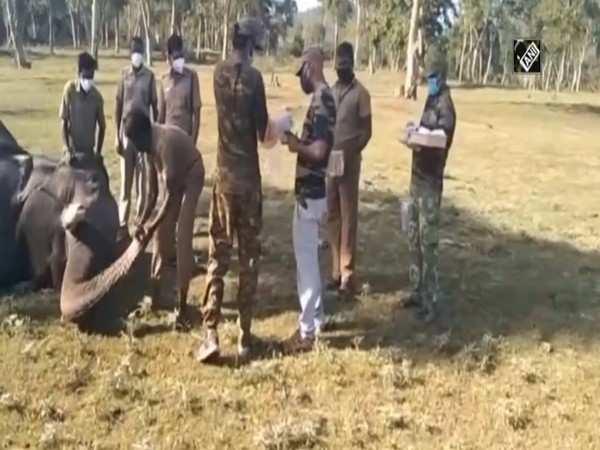 28 elephants undergo COVID-19 test in TN's Mudumalai reserve