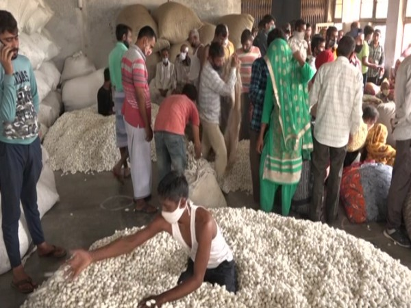 Farmers in J-K's Udhampur generate good revenue from sale of cocoons through auction