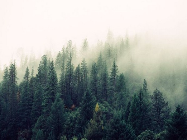 Study shows forests play greater role in depositing toxic mercury across globe