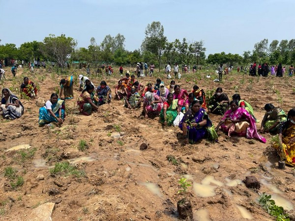 Green India Challenge sets world record, plants 1 million saplings in an hour in Telangana