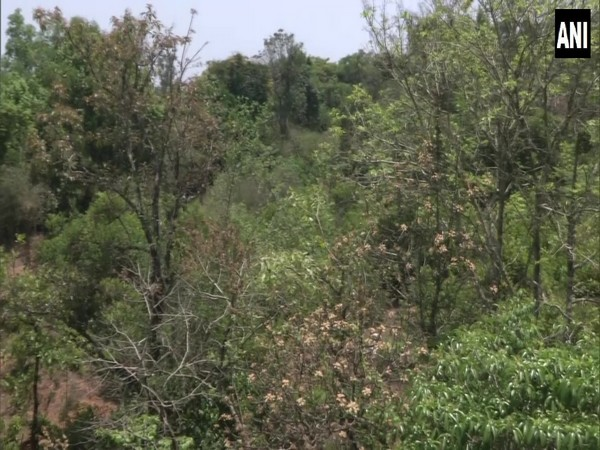 Entrepreneur buys 21-acre barren land, converts it into forest in Karnataka